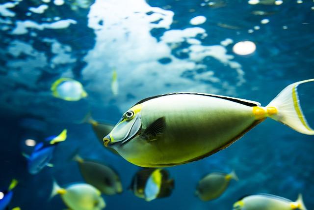 Photo of Znanstvenici dokazali, ribe imaju karakter