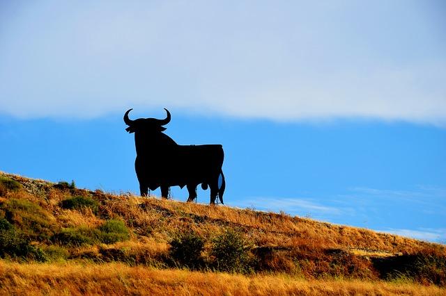 Photo of Brutalna zabava: Alternativno trčanje s bikovima