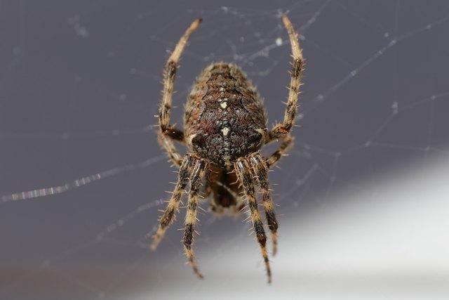 Photo of Kako držati paukove dalje od kreveta i spavaće sobe