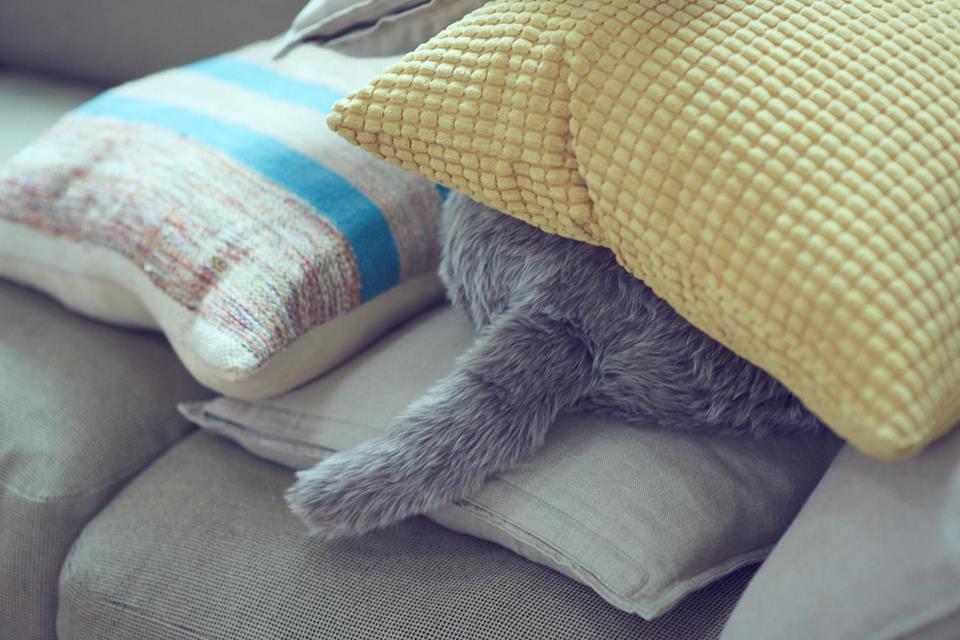 Photo of Qoobo – jastuk koji maše repom i pomaže ljudima