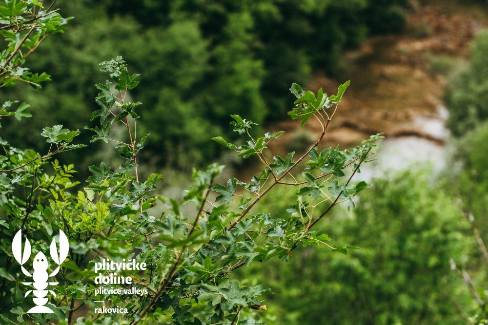Photo of FOTO Između Ekvatora i Sjevernog pola je… Ruta šume kod Rakovice!