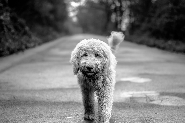 Photo of Pasmine koje se najbolje slažu s drugim psima