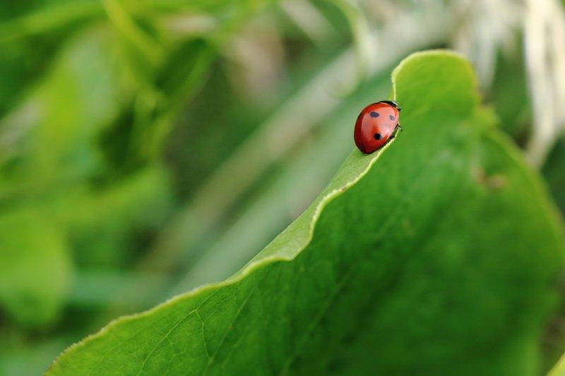 Photo of Narodna vjerovanja: Mali znakovi iz prirode koji donose sreću u život