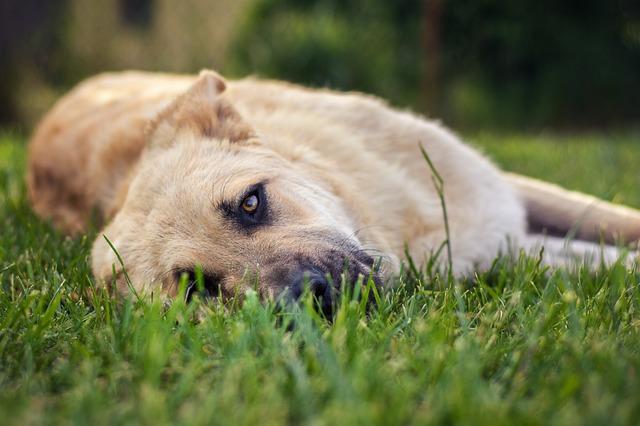 Photo of Znakovi da vam vaš pas vjeruje