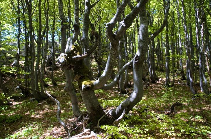 Photo of SVJETSKA PRIRODNA BAŠTINA: Nacionalni park Sjeverni Velebit organizira popularno stručna predavanja o velebitskim šumama