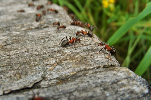 """Photo of Otkriven parazit koji napada mrave i pretvara ih u """"zombije"""""""