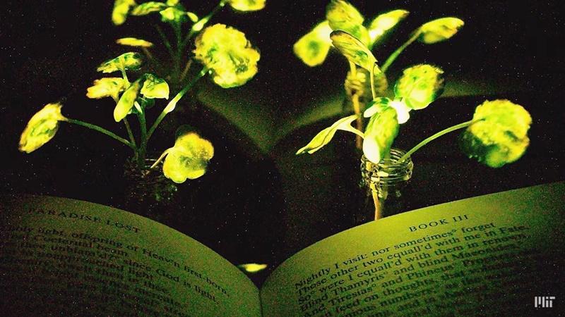 Photo of Biljke koje svijetle u mraku uskoro će zamijeniti sobnu rasvjetu?