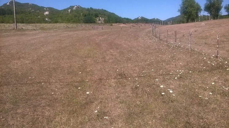 Photo of Gospićkim poljoprivrednicima će biti isplaćeno 900.000 kuna za štete od suše