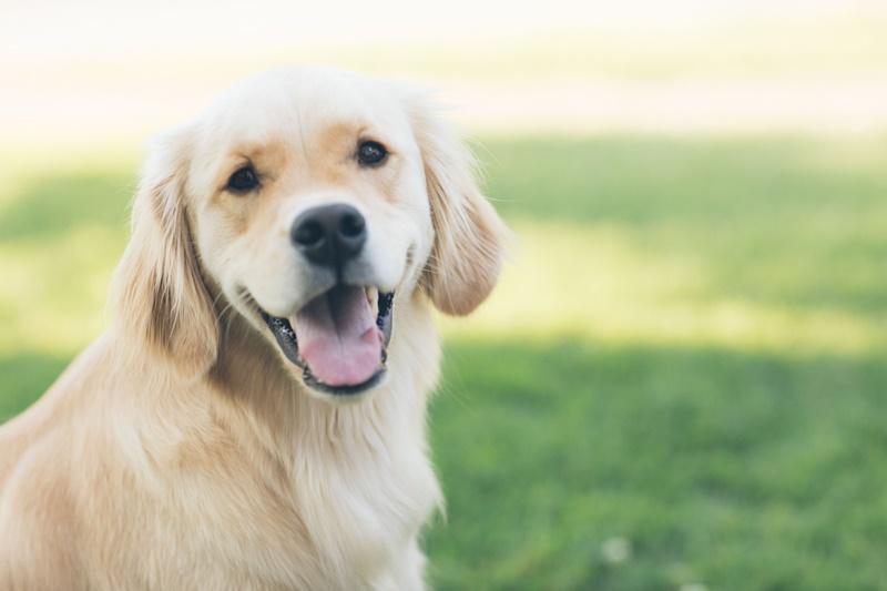 Photo of U Gospiću započela akcija obveznog cijepljenje pasa protiv bjesnoće