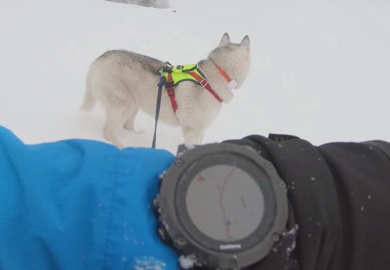 Photo of VIDEO: Ante i Mishka u zimskoj pustolovini na Velebitu!