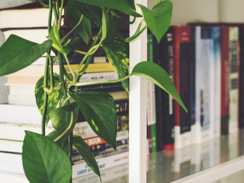 Photo of Biljke koje spašavaju sezonu grijanja