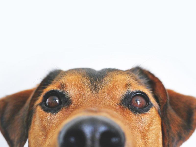Photo of Povjerenje između psa i čovjeka stječe se jednom jednostavnom gestom