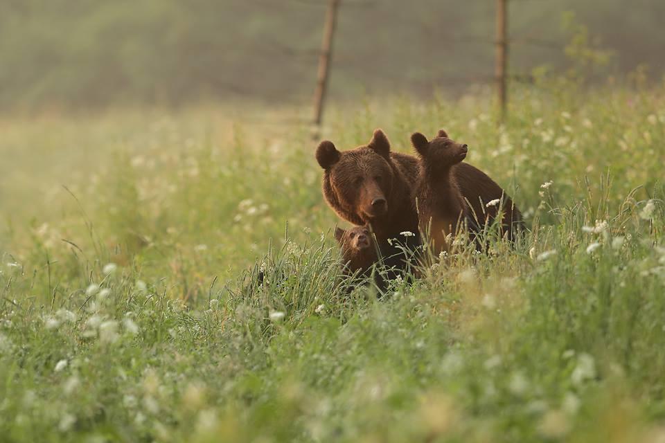 """Photo of POVODOM 19. ROĐENDANA Nacionalni park Sjeverni Velebit poziva na izložbu """"Život s medvjedima""""!"""