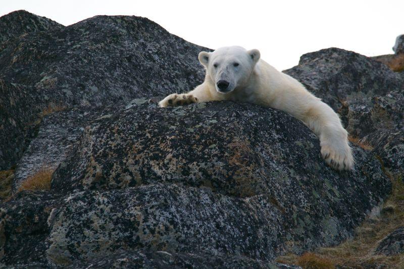 Photo of Alarmantno stanje: Procjenjuje se da 2030. godine počinje arktičko ljeto bez leda