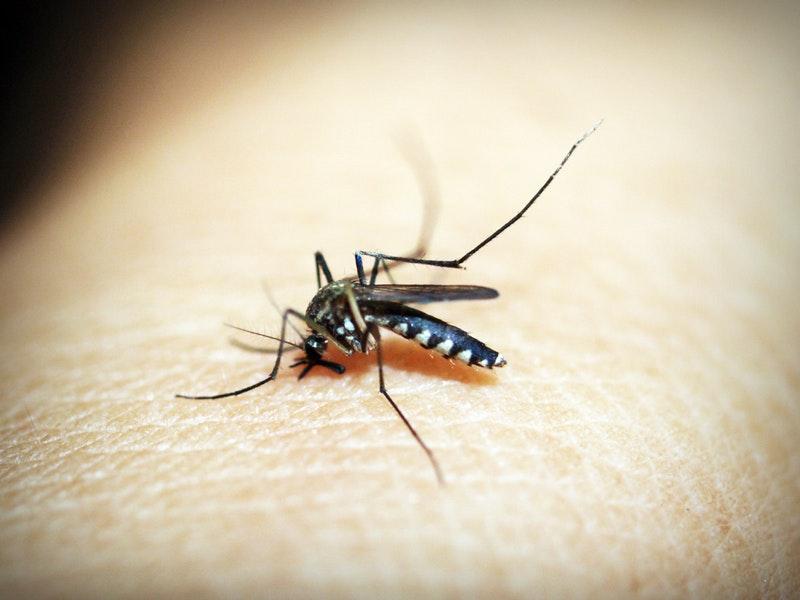 Photo of 4 tipa ljudi koje komarci najviše vole