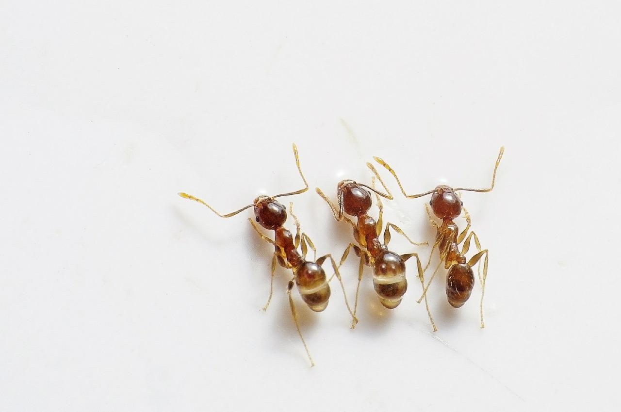 Photo of Prirodna sredstva protiv mravi u kući
