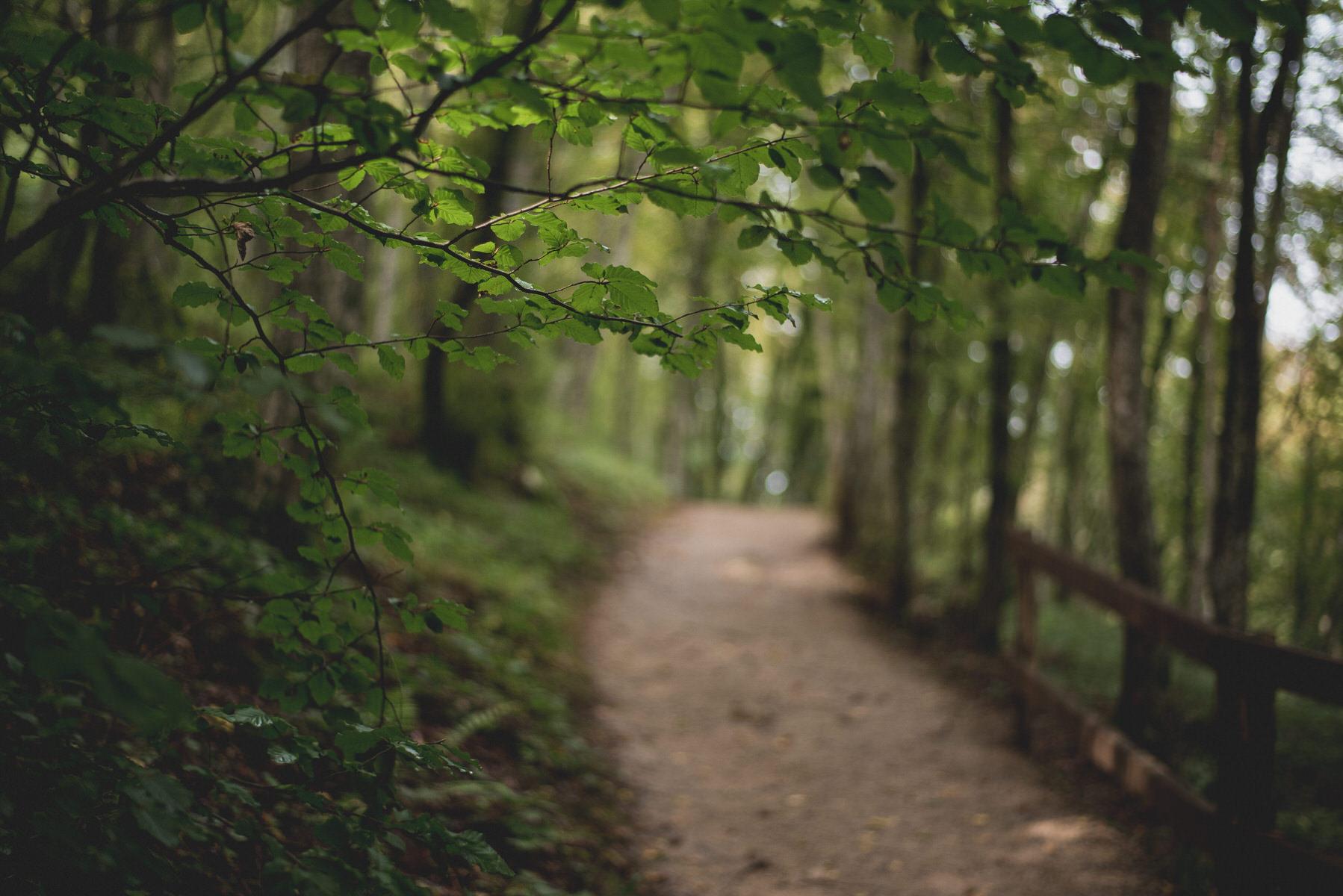Barać-Forest-Trail-34