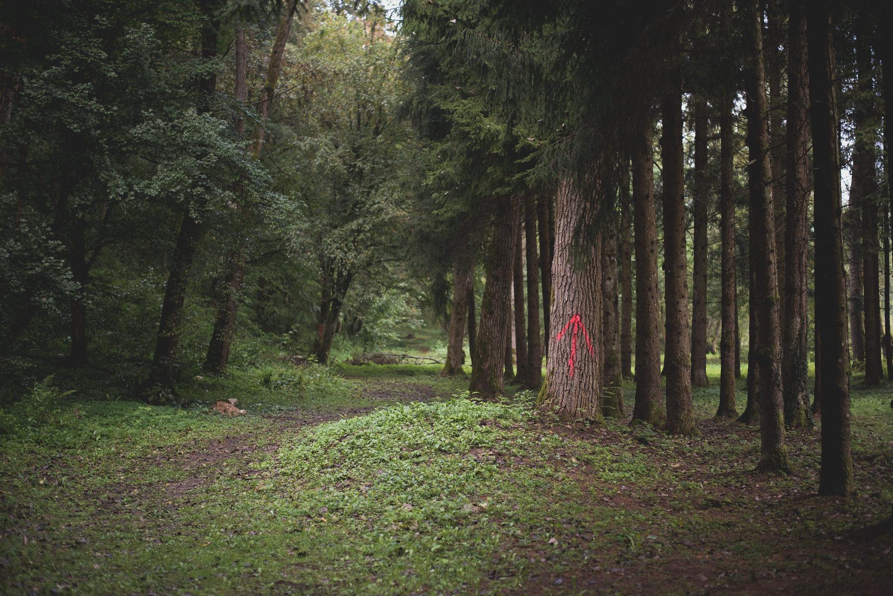 Barać-Forest-Trail-61