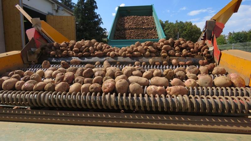 Photo of Odličan urod ličkog krumpira u Lovincu