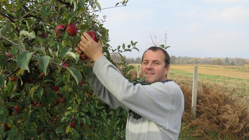 Photo of Gospićanin Marjan Pavičić ove godine očekuje rekordan urod jabuka