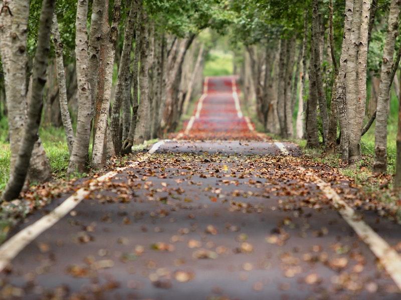 Photo of Jesen donosi probleme vozačima: Vlažno lišće sklisko je kao led