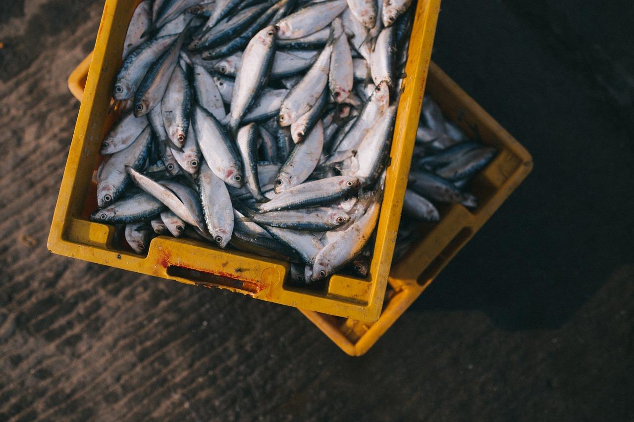 Photo of Hrvatskim ribarima EU odobrila rad s mrežama potegačama i malim plivaricama