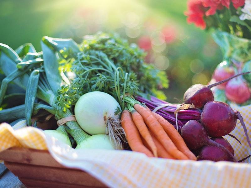Photo of Idealna prehrana za zdravlje ljudi i planeta