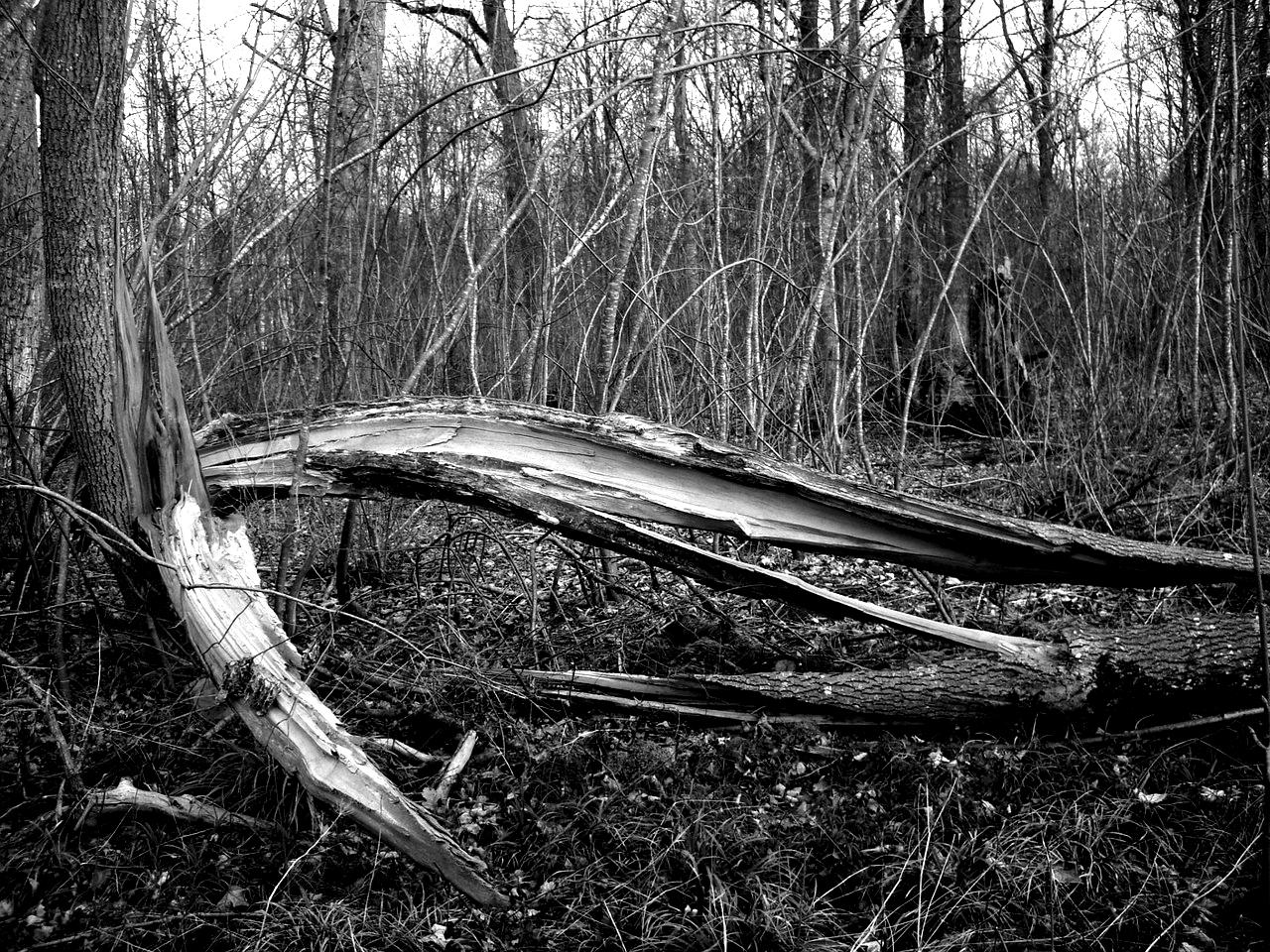 Photo of Što se događa s perušićkim šumama? Šumar upozorava na nemjerljivu štetu i gubitke