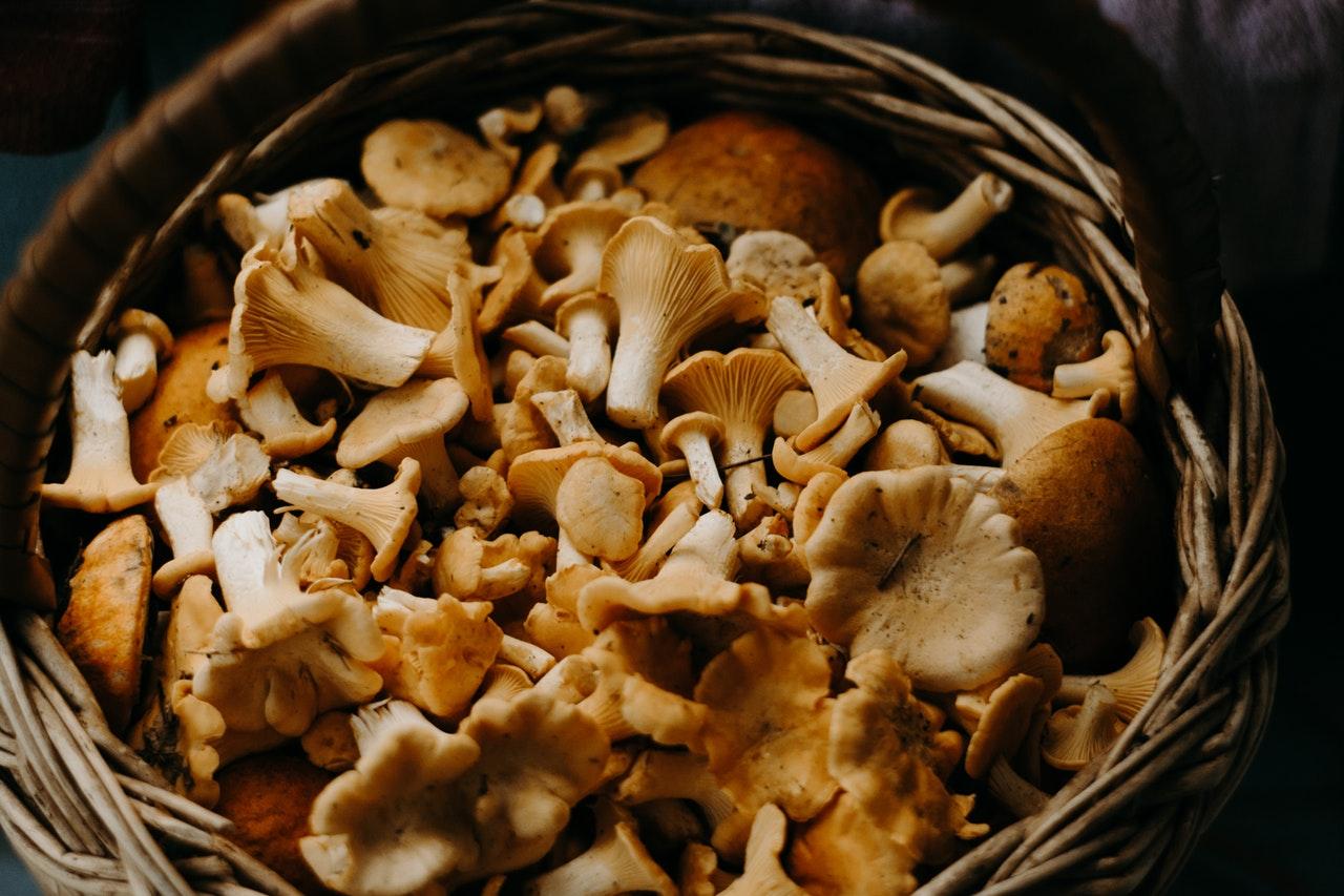 Photo of Konzumacija gljiva može prepoloviti rizik od propadanja kognitivnih sposobnosti