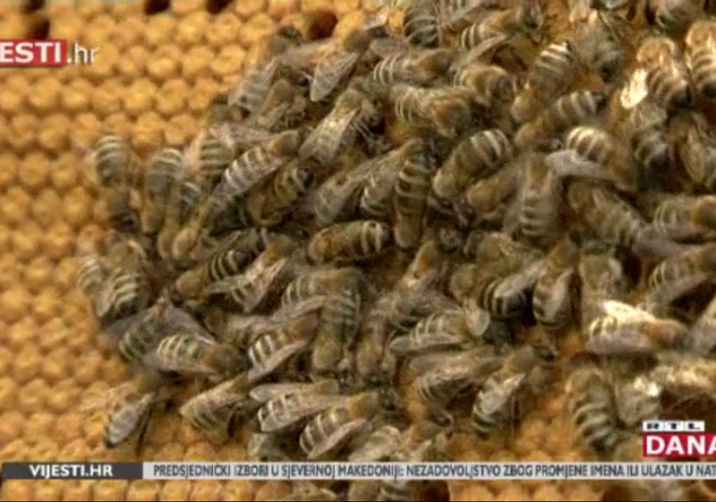 Photo of VIDEO Pčelari diljem Hrvatske zabrinuti zbog pomora pčela