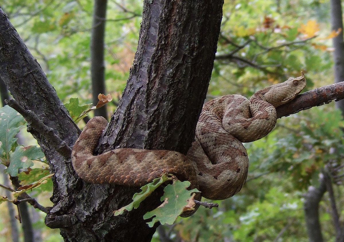 Photo of Bude se iz zimskog sna: Što napraviti ako vas ugrize zmija?