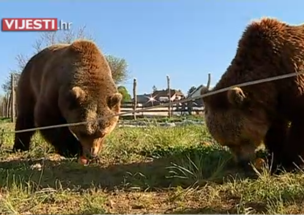 Photo of VIDEO Macola zbog Mrkija i Brunde želi otvoriti vlastiti ZOO