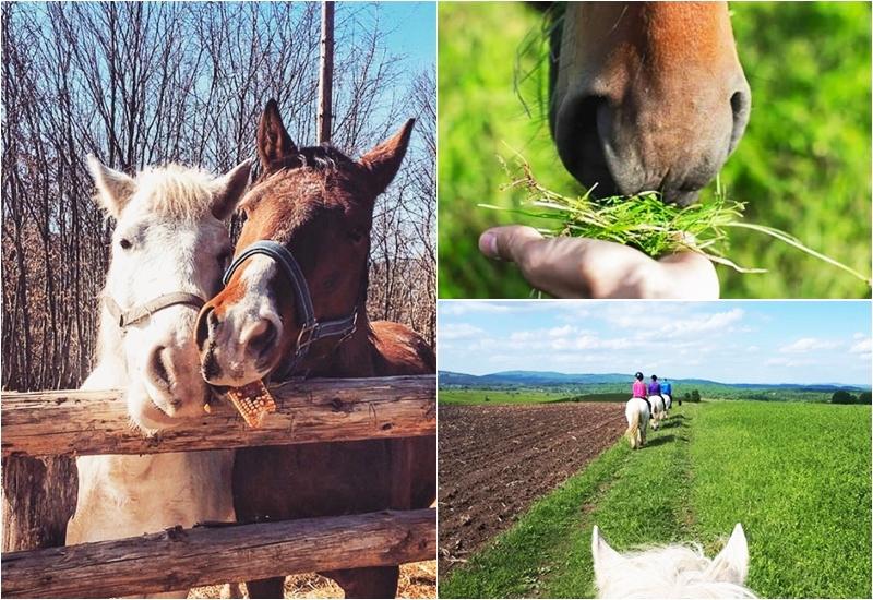 Photo of FOTO Kažu da konji djeluju smirujuće na čovjeka, u Plitvičkim dolinama to možete i provjeriti