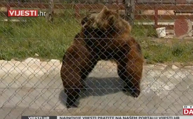 Photo of VIDEO Sudbina medvjeda Mrkija i Brunde još uvijek neizvjesna