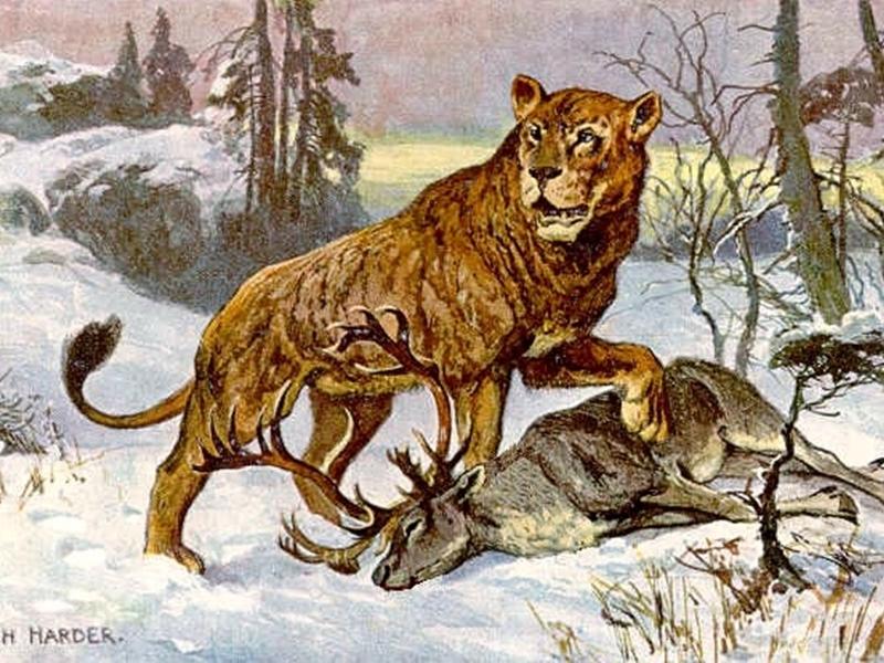Photo of TJEDAN CRIKVENICE  Crikvenicom su nekad hodali lavovi, veći i strašniji od današnjih