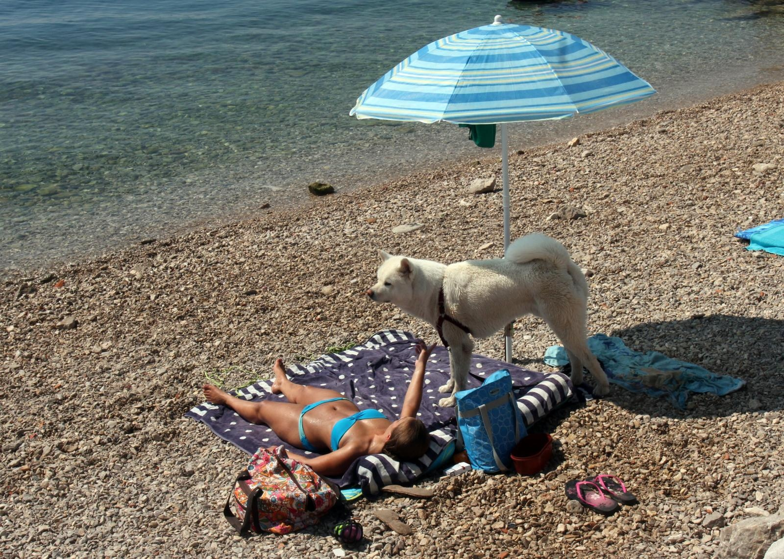 Photo of TJEDAN CRIKVENICE Na ovoj plaži i vaš četveronožni ljubimac može popiti  pivo
