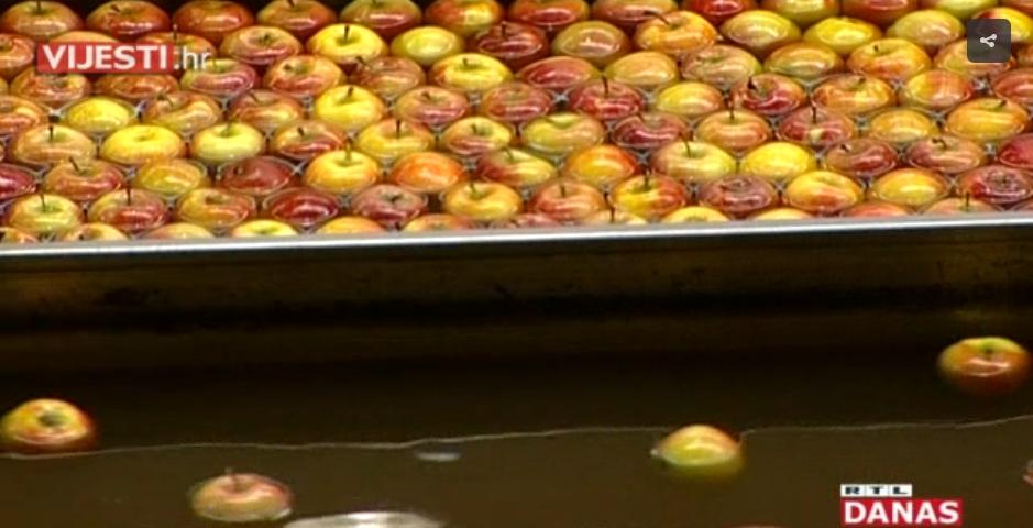 Photo of VIDEO Volimo domaće jabuke, ali jedemo uvozne: uzgajivači prisiljeni hraniti svinje urodom