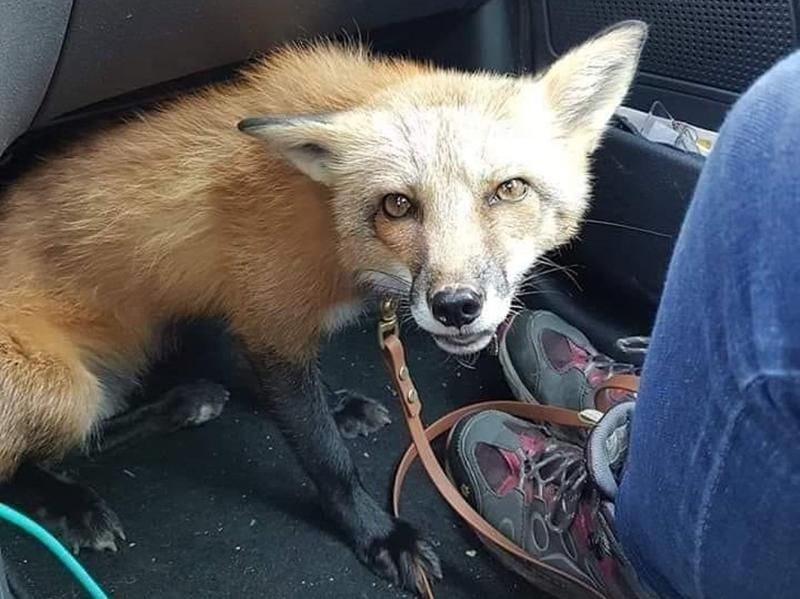 """Photo of Turisti pronašli izgubljenog """"psa"""" – traži se vlasnik!"""