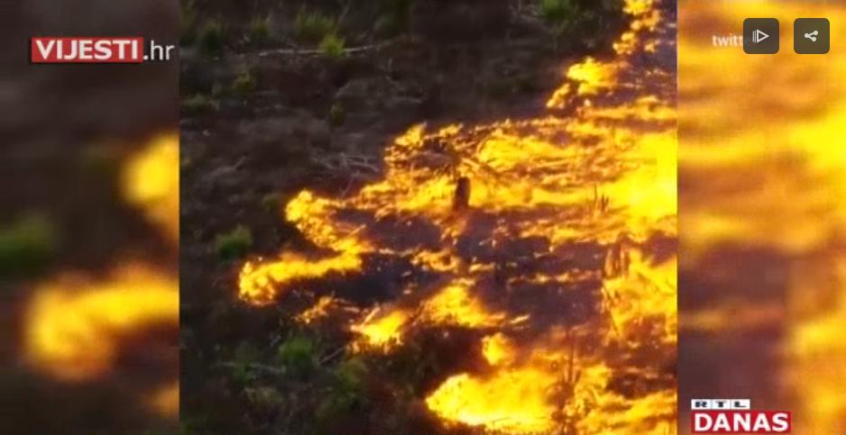 Photo of VIDEO Stravični prizori iz srca Amazone