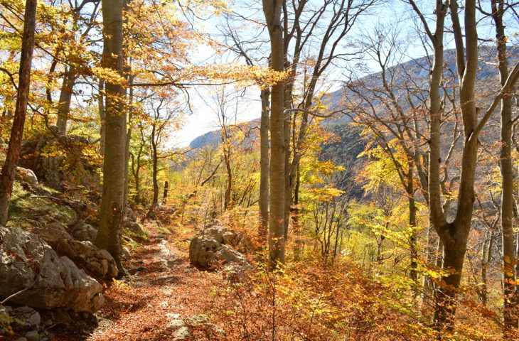 Photo of FEARLESS VELEBIT Stižu sredstva za razminiranje i očuvanje velebitskih šuma