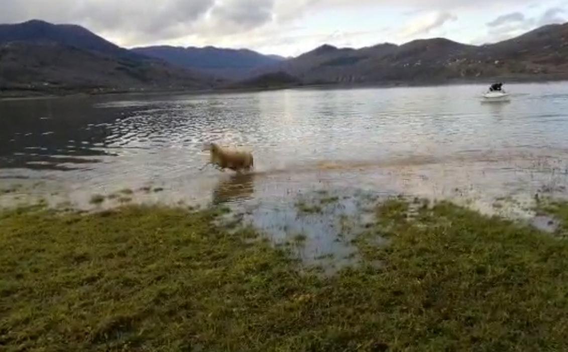 Photo of VIDEO Šezdeset ovaca spašeno od poplave u Općini Perušić