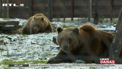 Photo of VIDEO Macola zbog Mrkija i Brunde želi otvoriti privatni zoološki vrt