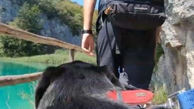 Photo of VIDEO Posjet Plitvičkim jezerima – iz perspektive jednog psa!