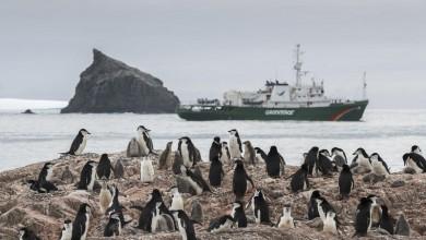 Photo of Kolonije pingvina na Antarktici smanjile su se i do 77% u posljednjih 50 godina