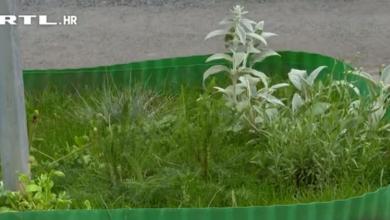 """Photo of VIDEO U centru Zagreba zasadili mali vrt pa ih netko tužio Gradu: """"Žao mi je što postoji netko koga ovo smeta"""""""
