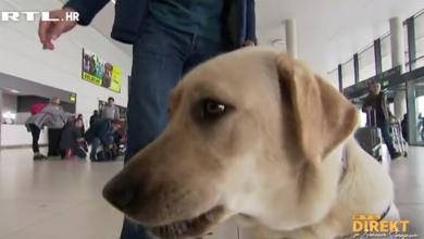 """Photo of VIDEO Mogu li psi namirisati koronu? """"Pola sekunde bi im trebalo biti dovoljno da znaju ima li netko virus"""""""