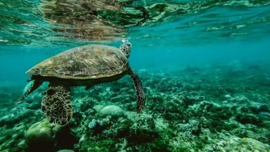 Photo of Green Sail organizira virtualni izazov na Svjetski dan oceana!
