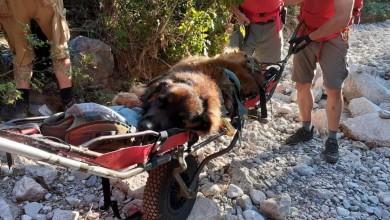 Photo of Za sve je kriv vlasnik: HGSS spasio psa u Maloj Paklenici