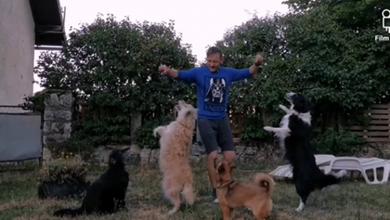 Photo of VIDEO Lički psi zaplesali na tradicionalnu grčku glazbu! Hit video snimio Perušićan
