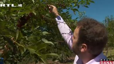 Photo of VIDEO Voćka na kojoj raste 120 sorti jabuka konkurira za obaranje Guinnessova rekorda